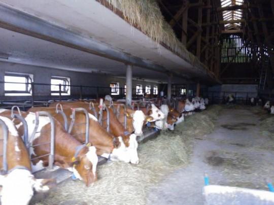 boerderij overnachting